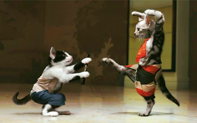 Cat-fight-club-kung-fu-karate-kick-funny-pet-pictures